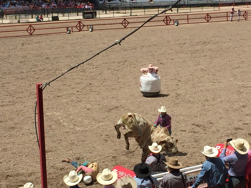 The barrel man (clown) watches intently as bull and rider break out of the chute